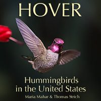 Cover image of Hover: Hummingbirds in the United States