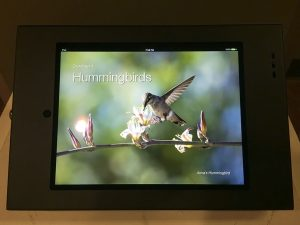 Hover: Hummingbirds at the Tempe Public Library